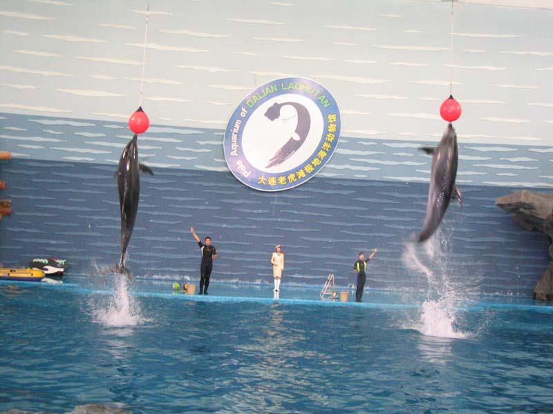 海豚顶球表演