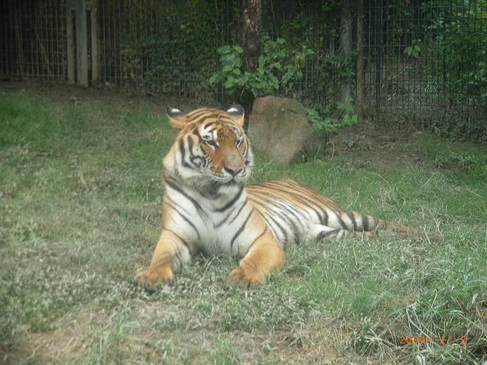 浙江省最大的老虎