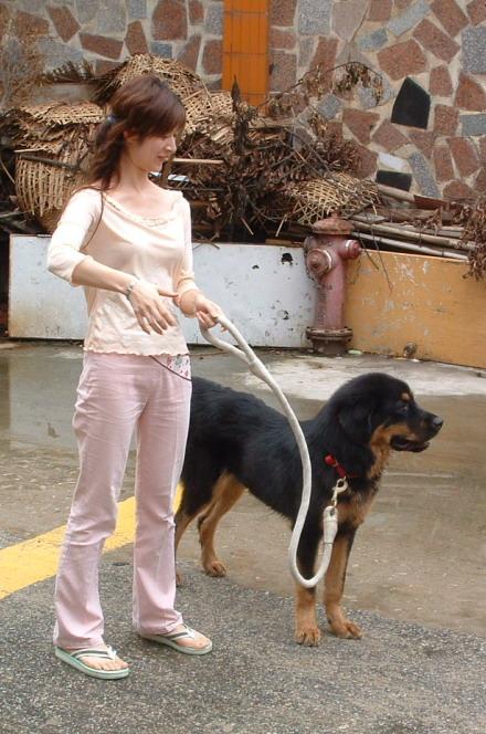 女人与狗欢爱_女人爱狗狗图片