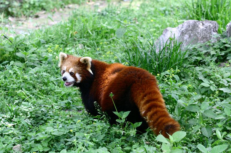 我的野生动物朋友--续集,野生动物园秋游