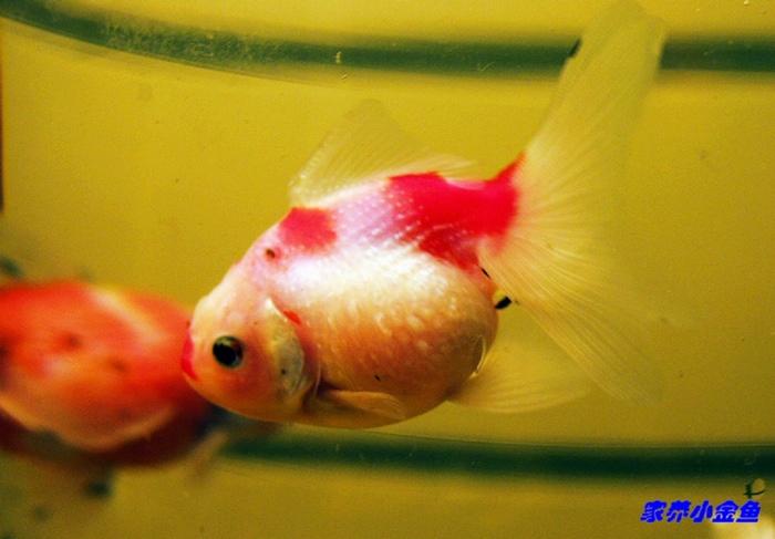 三d金鱼动态壁纸