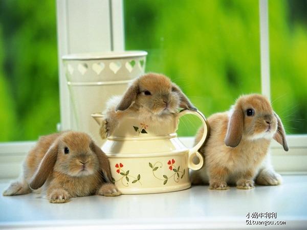 喜欢小动物的tx进来欣赏啊~ p2有可爱兔兔啊