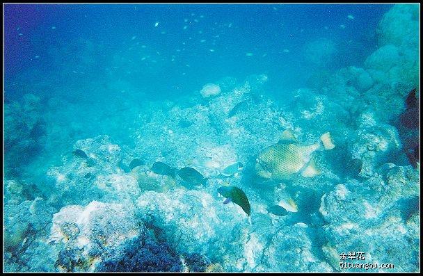 (p8更新deluxroom房间内部细节)马尔代夫olhuveli岛风景照水下照片