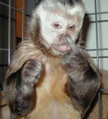 动物的超搞笑表情(转帖)