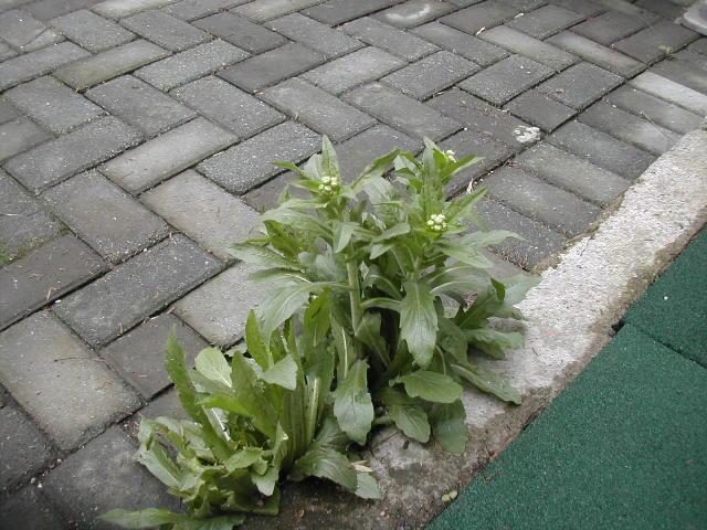 砖头小花园设计实景图