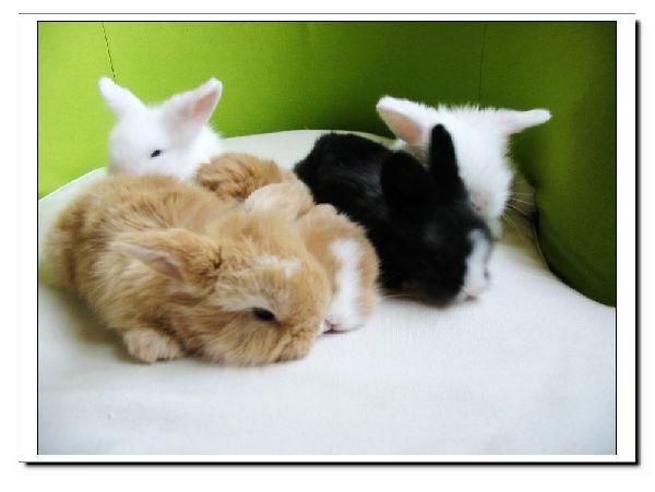 五只小奶兔>>>>>>>>垂耳兔兔!超甜超可爱!