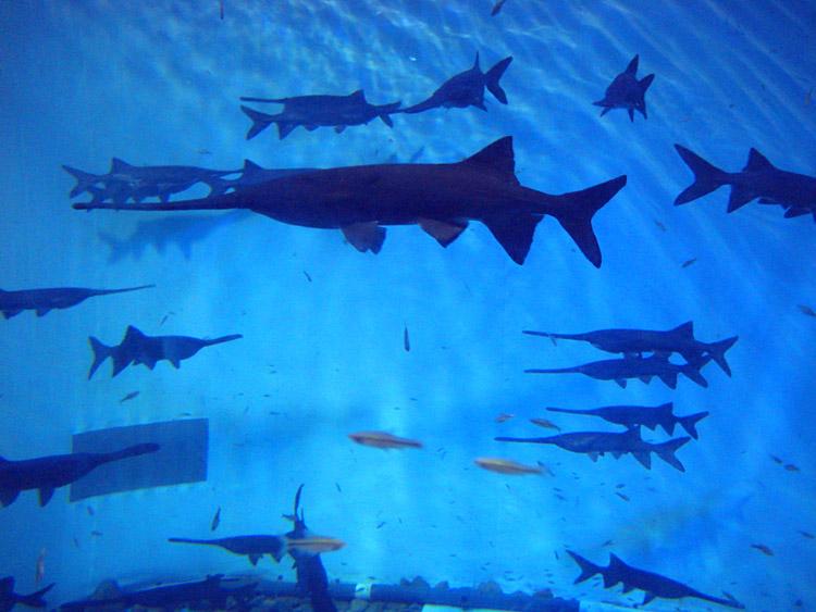 海底世界箭鱼简笔画