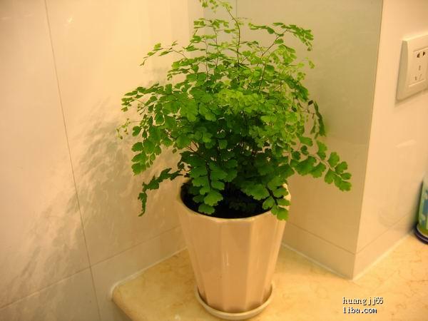 有什么耐寒的能放在案头的绿色植物