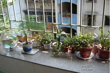 简单的阳台绿植