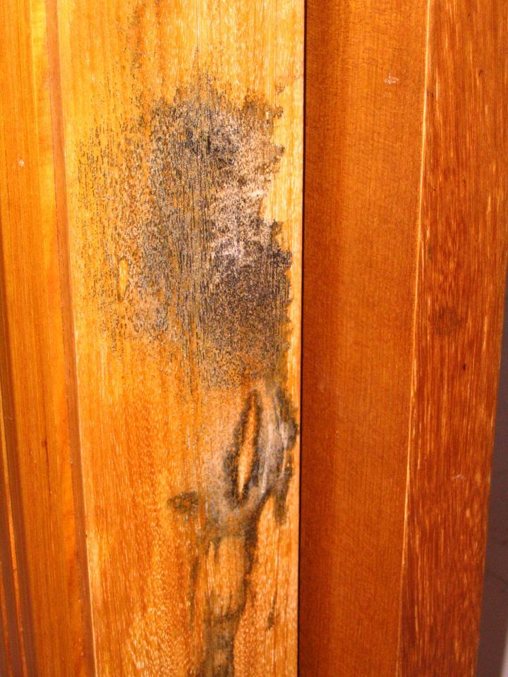 卫生间门套发霉了怎么办?