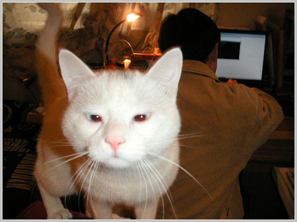 两只可爱猫咪斗图图片头像