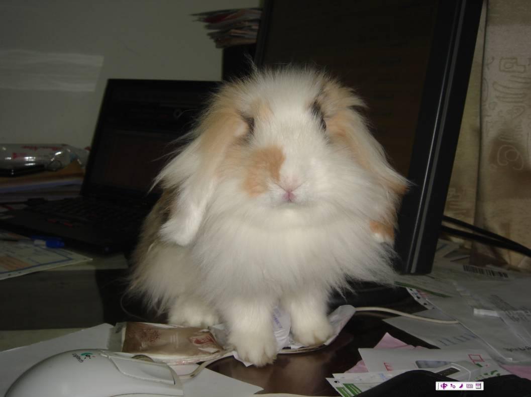 才买5天的小兔子死了
