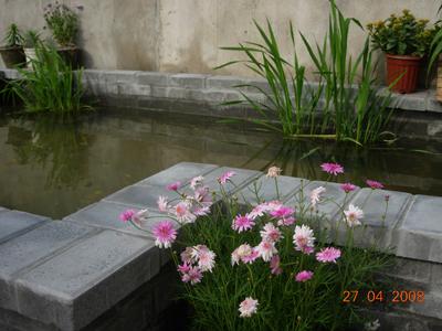 小院花坛设计图