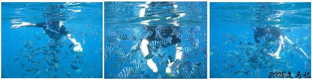 2008走马记~热浪岛追鲨鱼