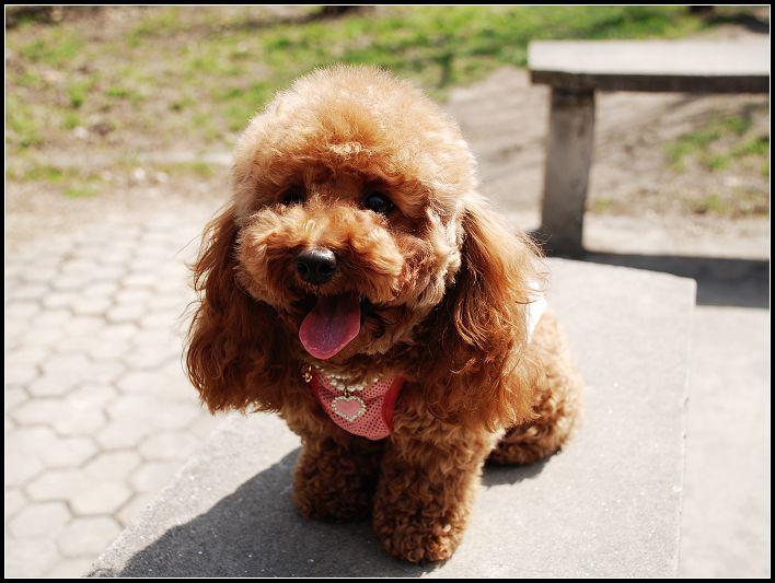 小清新可爱狗狗图片