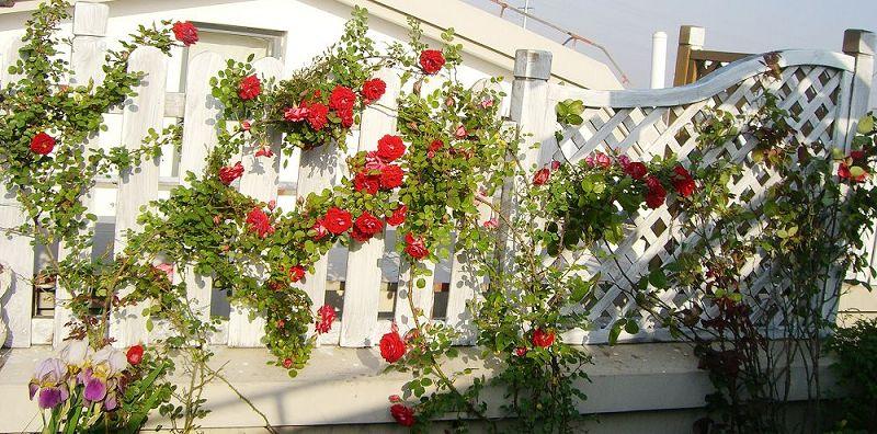 懒人的屋顶花园 装修日记 篱笆网 - 年轻家庭 生活社区
