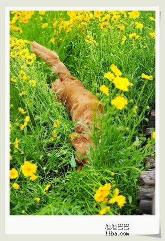 赏花拍照摆pos图片