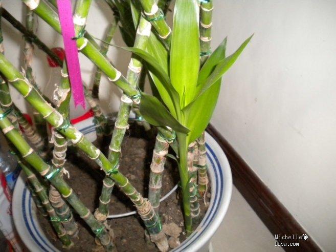 芦荟叶子扦插方法图解