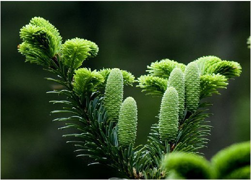 国家Ⅰ级重点保护野生植物 - sdytkfqgwh - sdytkfqgwh的博客