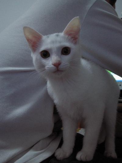 ***人见人爱,花见花开***,宇宙超级帅气无敌小白猫-苗苗驾到(1.