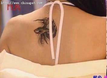 斗鱼里是满我想知道斗鱼片中小燕子背上的斗鱼纹身 (354x258)图片