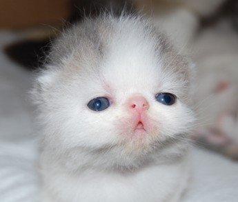 欧美可爱萌小孩动物