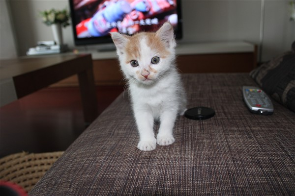 小猫咪正脸图片可爱