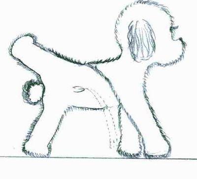 泰迪狗简笔画