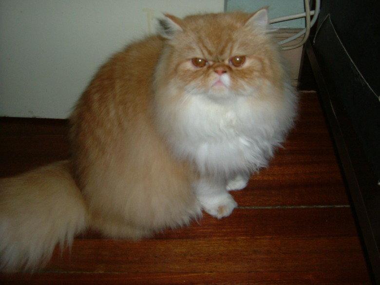 我的可爱猫 宠物 篱笆网