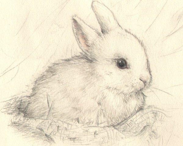 兔子图片可爱素描
