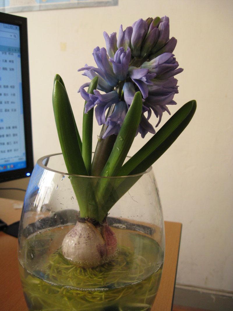 小花钩针盆栽图解