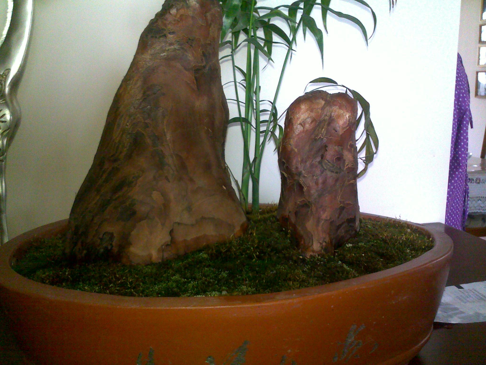 篱笆的xdjm谁懂的檀香木盆景的真假