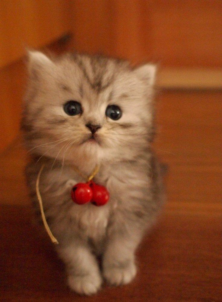 qq头像可爱馋猫