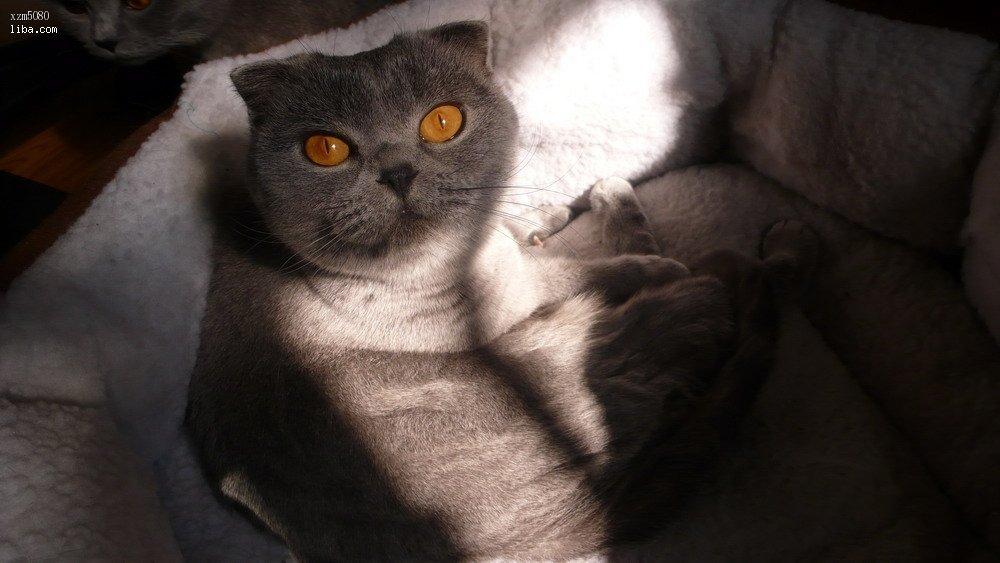 最萌最可爱最宠的小猫咪