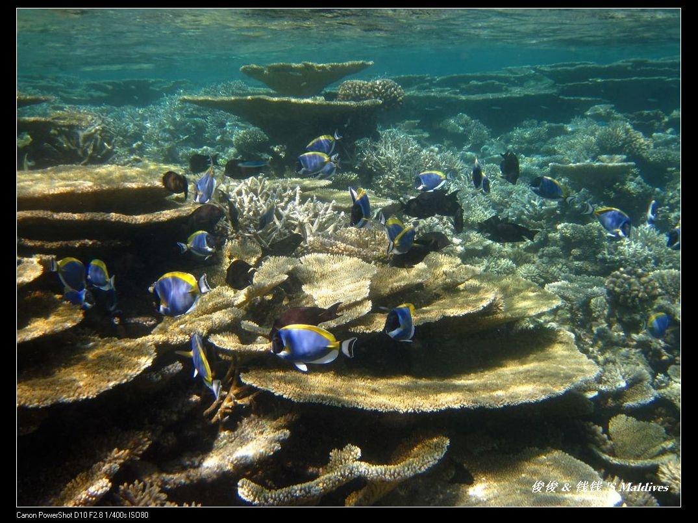 神仙珊瑚岛海底餐厅