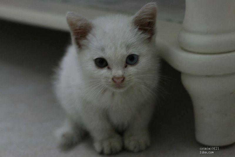 有只眼睛闭着的可爱的猫咪图片