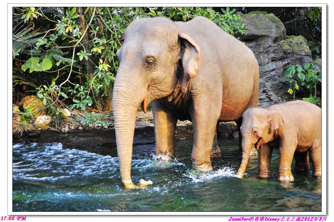 大象 动物 1080_719