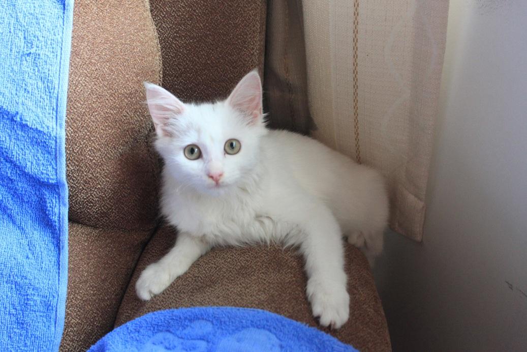 可爱小猫咪求领养!