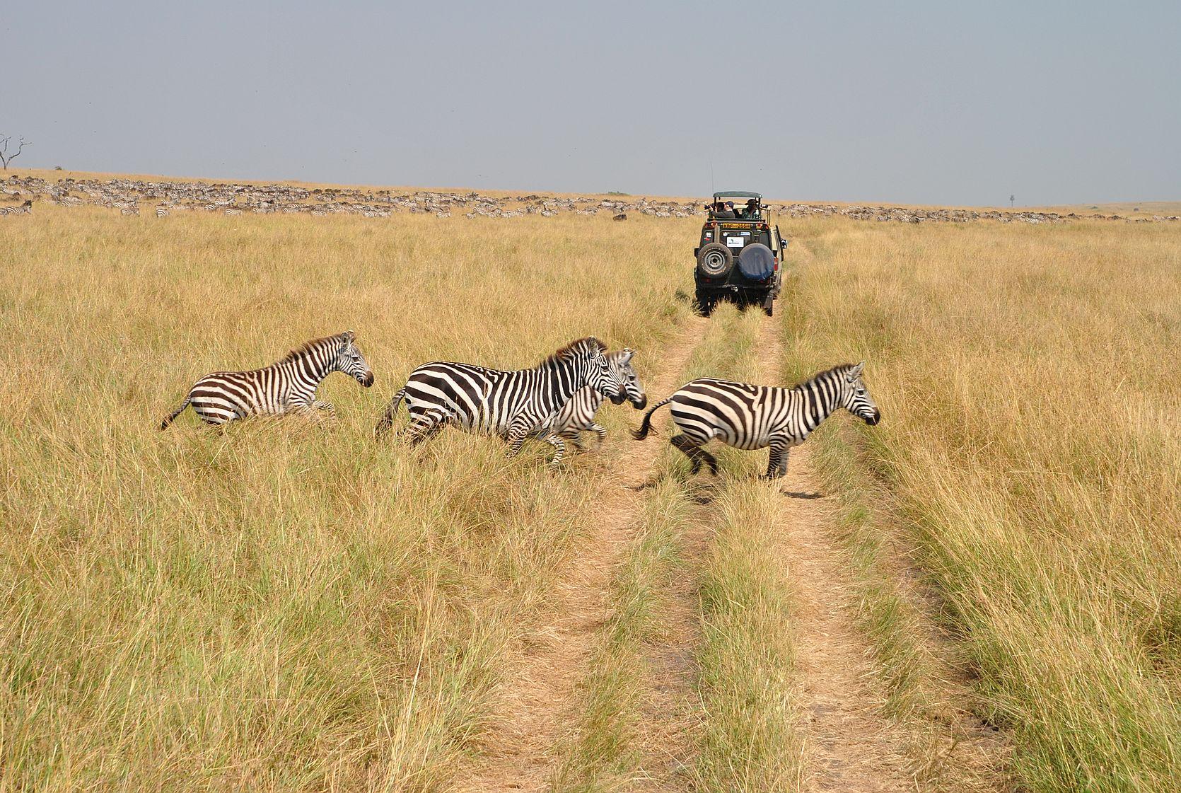 7月肯尼亚看动物大迁徙+迪拜亚特兰蒂斯水上乐园哈皮
