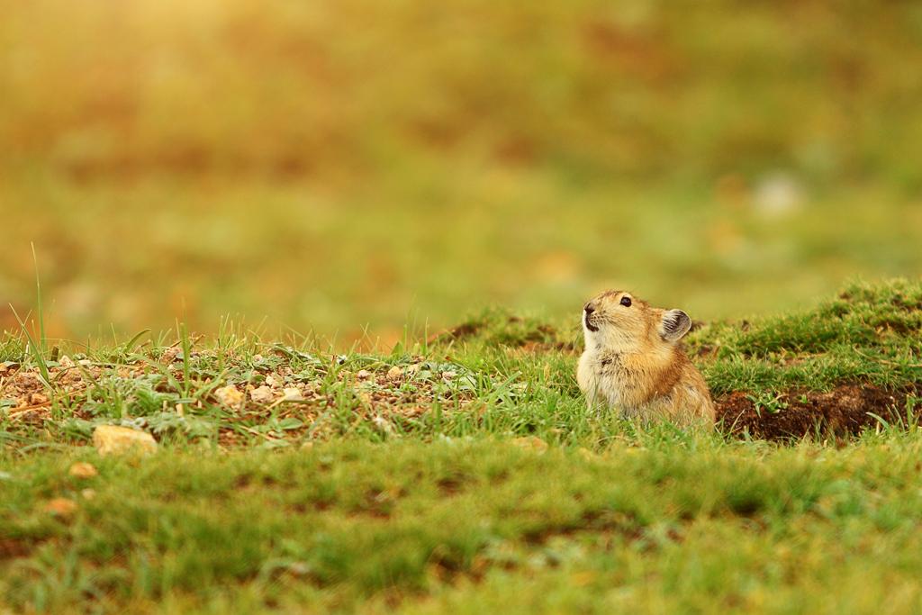 来一张超可爱的小动物明星