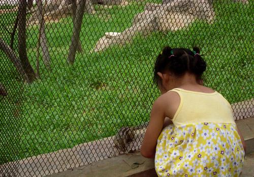 2011年8月10,好想摸摸小松鼠图片