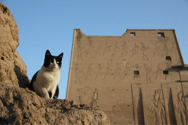 2013春节---金字塔下的国度,探索埃及