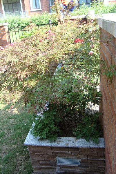 欧式私家小花园