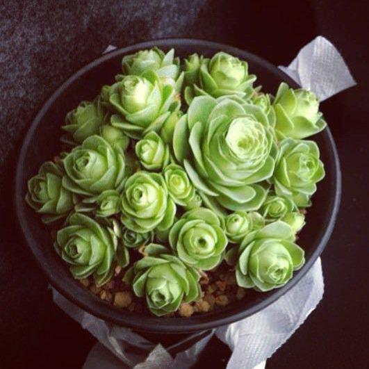 1000+ Images About Succulents On Pinterest