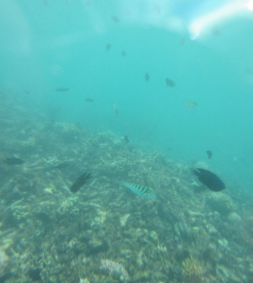 lz的小照相机套了个套子在水下照的,光线不足,彩色的变接近黑白的了