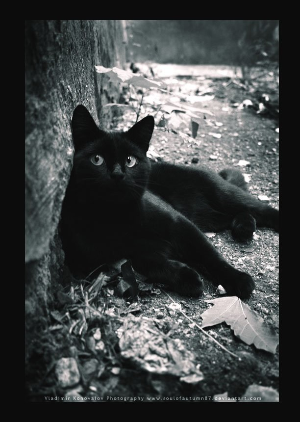 只要有黑猫愿意停下来让你摸头