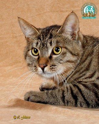 壁纸 动物 猫 猫咪 小猫 桌面 325_406 竖版 竖屏 手机
