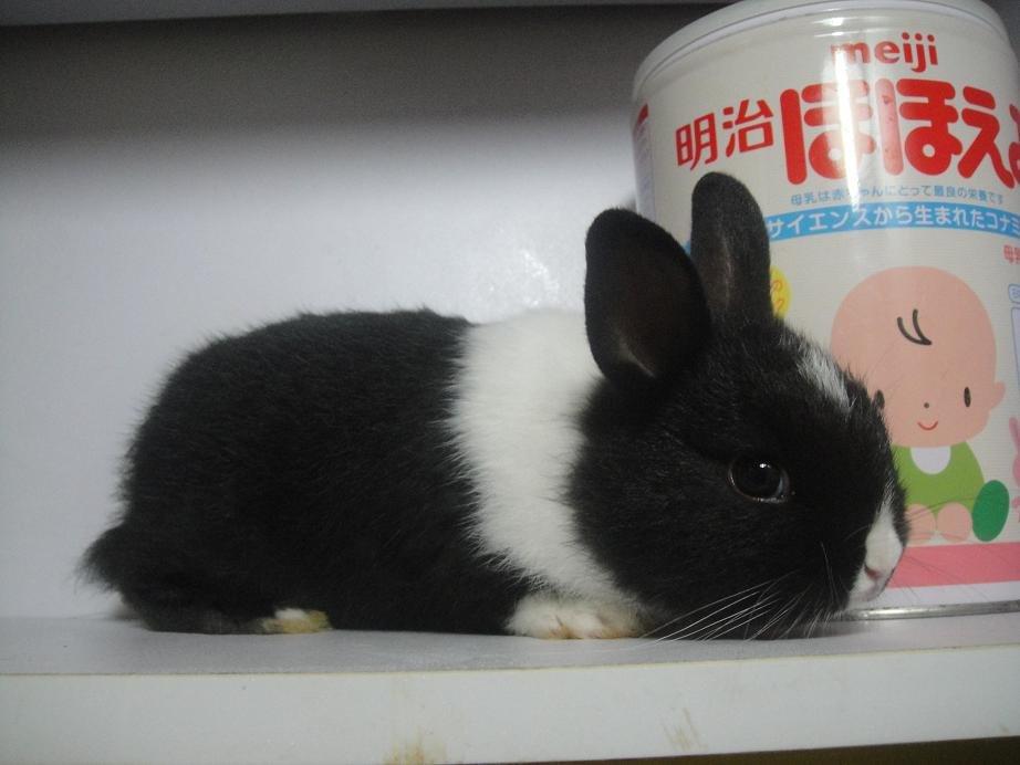 疯狂动物城里兔子爸爸的图片