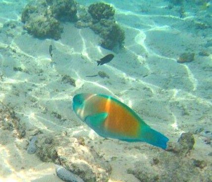 美丽 主题 蜜月/美丽的五彩小鱼啊。有点像孔雀鱼不?...