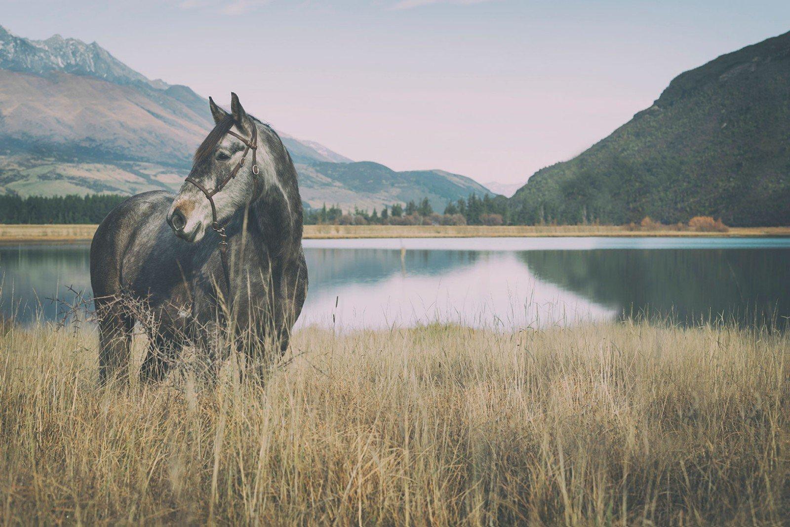 high-coutry-horses-hero.jpg